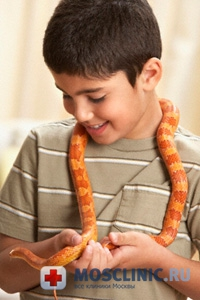 змея, укус