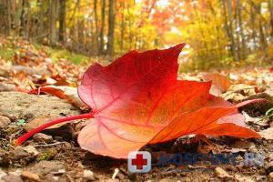 Как поддержать здоровье осенью?