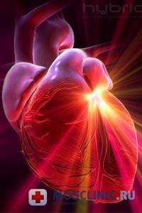 сердце и почки