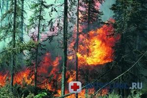 Президент сказал, что лесные пожары поедут тушить чиновники