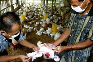Смертельно опасный птичий грипп активизировался